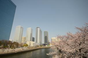 桜とOBPの写真素材 [FYI00195256]