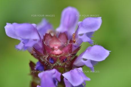 はなと蟻の写真素材 [FYI00195286]