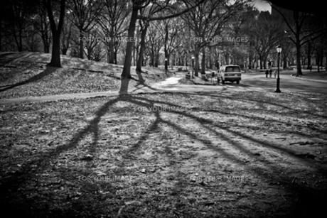 Central Parkの写真素材 [FYI00195438]