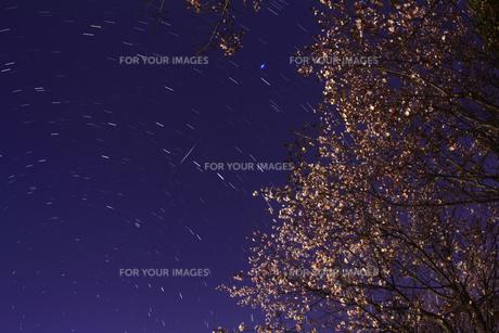 夜桜と北斗七星の写真素材 [FYI00195442]