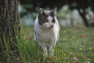 野良猫の写真素材 [FYI00195516]