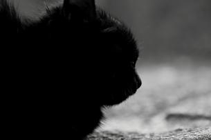 黒猫の写真素材 [FYI00195626]