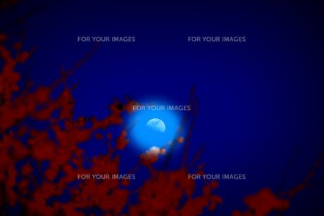 BLUE MOON(青い月)の素材 [FYI00195674]