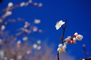 春の花の素材 [FYI00196112]