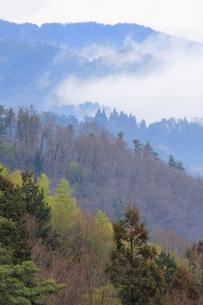 浅春の里山の写真素材 [FYI00196117]