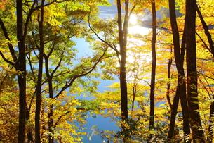 ダム湖畔の黄葉の写真素材 [FYI00196198]