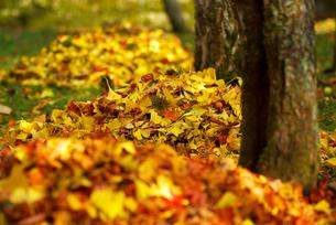 山盛りの秋の写真素材 [FYI00196379]