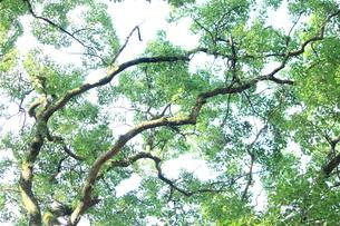樹の写真素材 [FYI00196870]