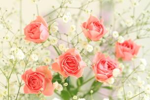 花束の写真素材 [FYI00196872]
