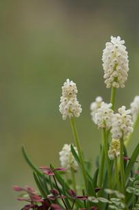 早春の花の写真素材 [FYI00196952]