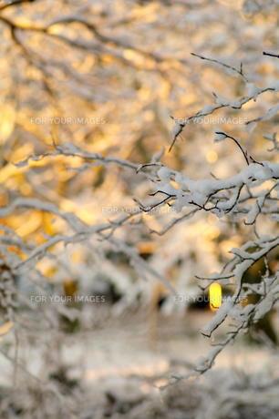 雪の朝の素材 [FYI00197001]
