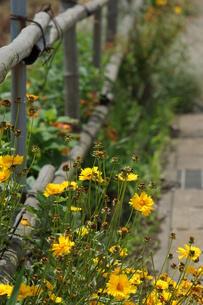 道端の花の写真素材 [FYI00197012]