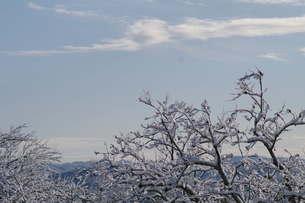 雪景色の写真素材 [FYI00197018]