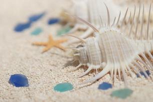 浜辺のイメージの写真素材 [FYI00197032]