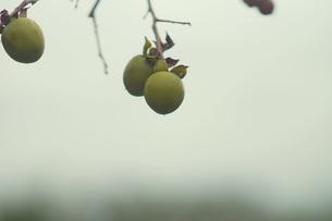 秋の日の写真素材 [FYI00197062]