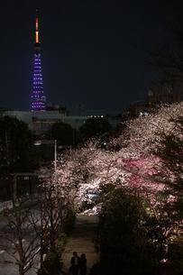 春の宵の写真素材 [FYI00197101]