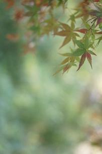 秋の写真素材 [FYI00197183]
