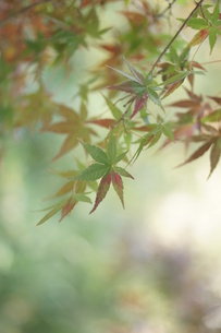 秋の写真素材 [FYI00197184]