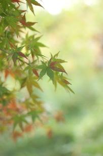 秋の写真素材 [FYI00197185]