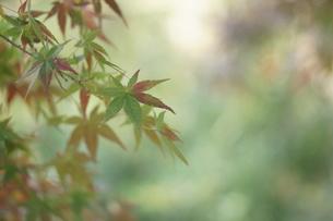 秋の写真素材 [FYI00197190]