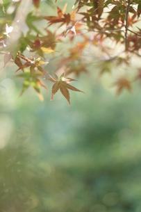 秋の写真素材 [FYI00197196]