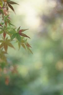秋の写真素材 [FYI00197200]