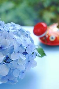 水色紫陽花の写真素材 [FYI00197359]