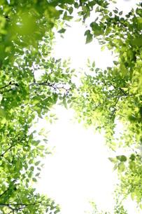 新緑の写真素材 [FYI00197461]