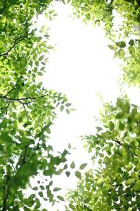 新緑の写真素材 [FYI00197462]