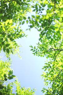 新緑と青空の素材 [FYI00197468]