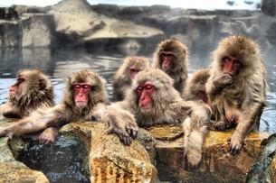 温泉に入る猿の写真素材 [FYI00197579]