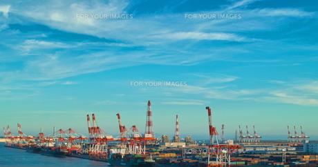 港のキリンの群れの写真素材 [FYI00197619]