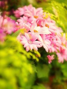 ピンクと黄色のお花で可愛く表現の写真素材 [FYI00197746]