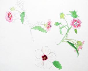 花のスケッチの写真素材 [FYI00197785]