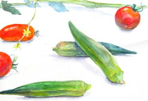 野菜のスケッチの写真素材 [FYI00197787]