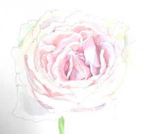 薔薇のスケッチの写真素材 [FYI00197791]