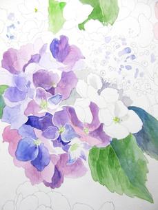 紫陽花のスケッチの写真素材 [FYI00197793]