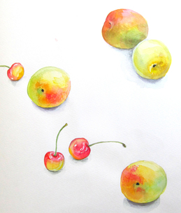 さくらんぼと梅の実のスケッチの写真素材 [FYI00197795]