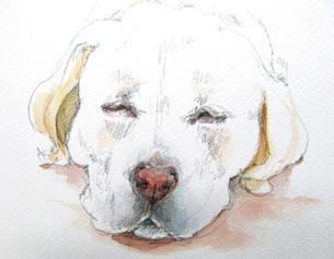 犬のスケッチの写真素材 [FYI00197802]