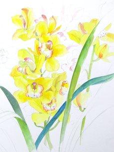 黄色いランの写真素材 [FYI00197808]