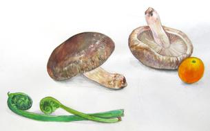 野菜のスケッチの写真素材 [FYI00197824]