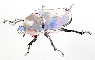 虫の写真素材 [FYI00197849]