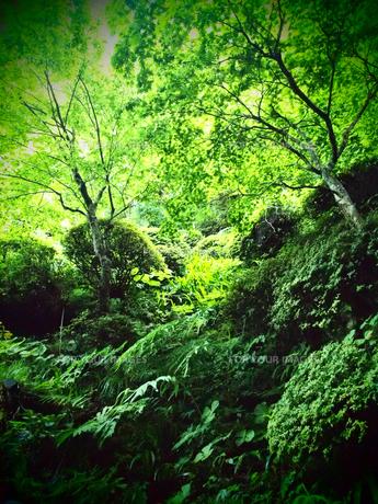 新緑の写真素材 [FYI00198377]