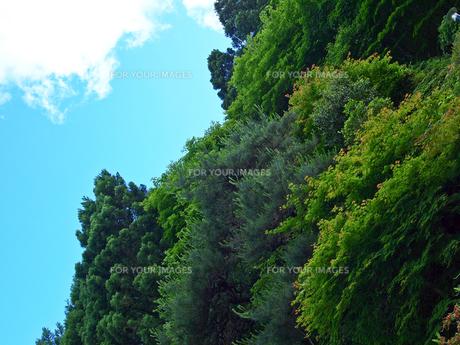 大空と森の写真素材 [FYI00198388]