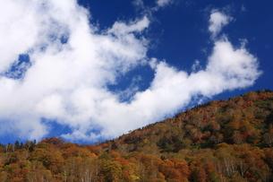 紅葉と秋の空の写真素材 [FYI00198405]