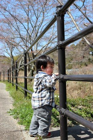 フェンスから下を眺める男の子の写真素材 [FYI00198413]