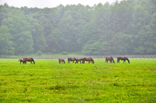 朝の牧場風景の写真素材 [FYI00198420]