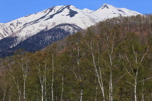 乗鞍高原一の瀬園地 残雪の乗鞍岳と新緑の白樺林の写真素材 [FYI00198473]