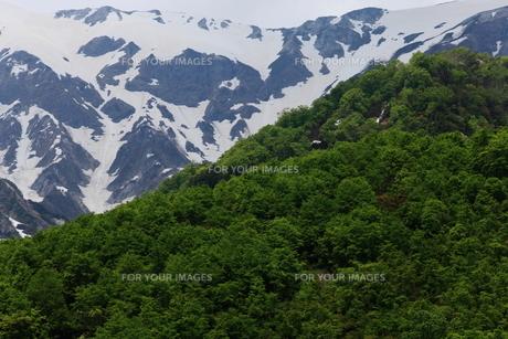 白馬岳の雪形の写真素材 [FYI00198484]