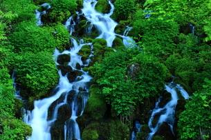 ブナ坂の清水の写真素材 [FYI00198496]